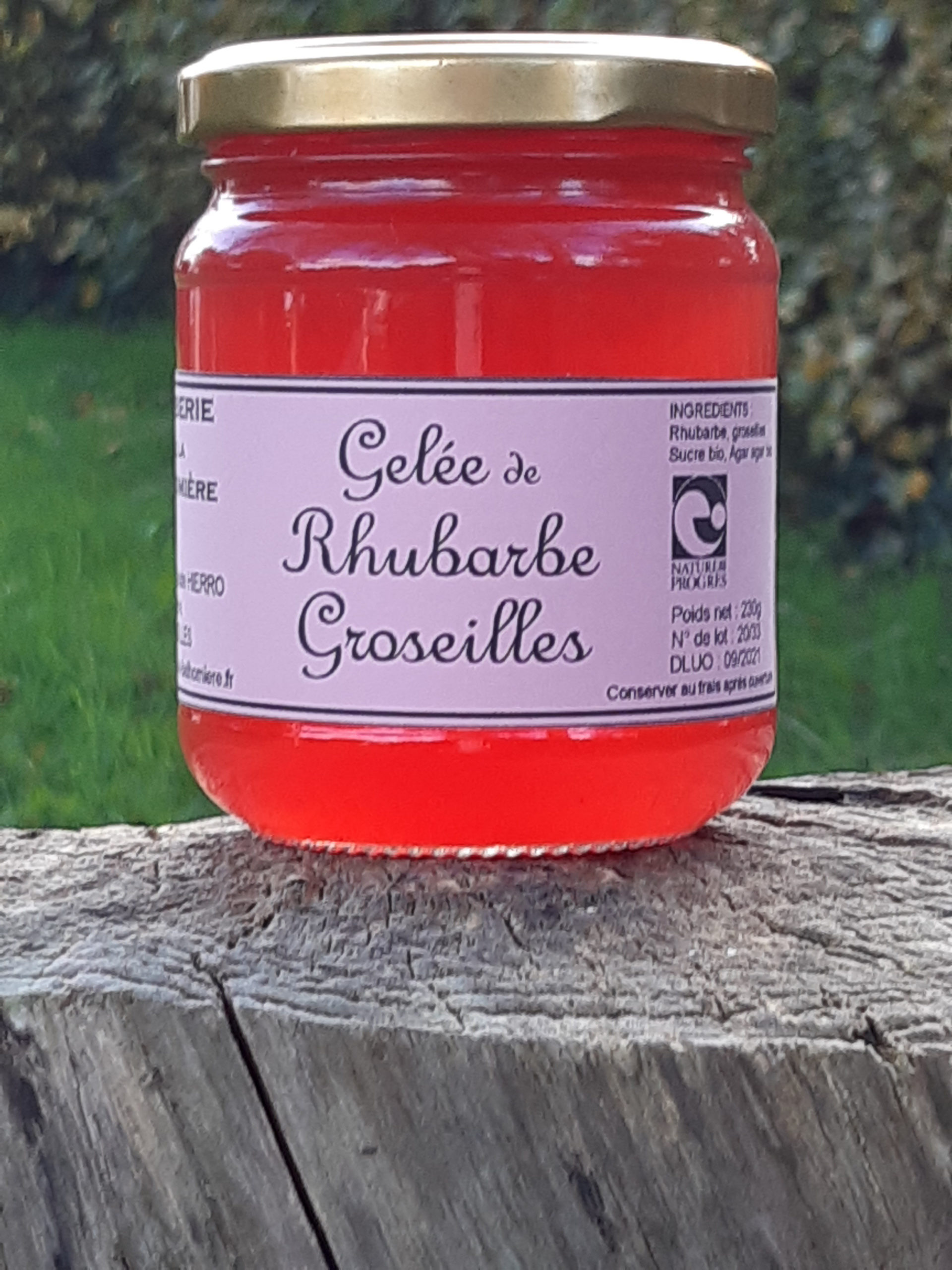 Gelée de rhubarbe et groseilles