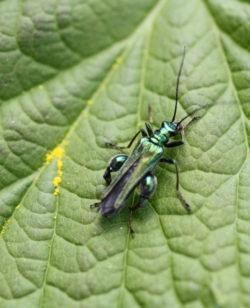Biodiversité observée lors d'un stage de permaculture